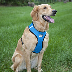 Comfort Padded Mesh Dog Harness and Leash