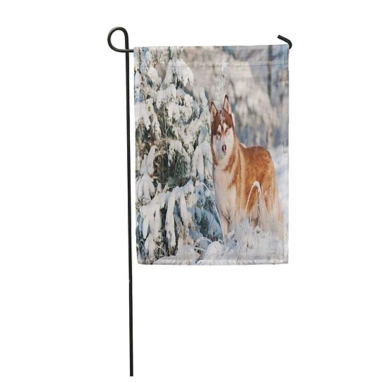 Buy Brown Siberian Husky Dog Winter Portrait Nature Puppy
