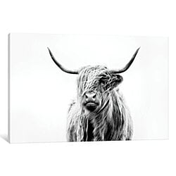 Portrait Of A Highland Cow by Dorit Fuhg