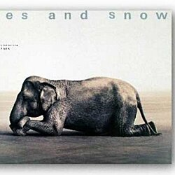 "Boy Reading to Elephant (lg) by Gregory Colbert 35.5""x51"" Art Print Poster"