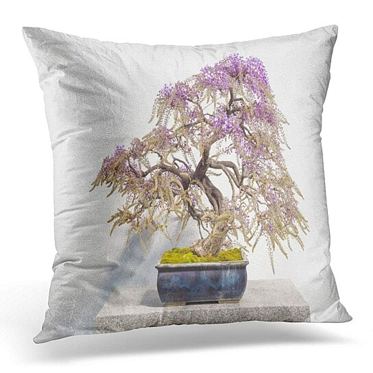 Buy Green Bonzai Blooming Japanese Wisteria Bonsai Pink Flowers Floribunda White Tree Pillowcase Cushion Cover 20x20 Inch By Harriet Queena Queena On Dot Bo