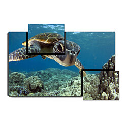 "Swimming Turtle - Ocean sea Turtle, 31.5"" x 21.5"" Print on Wood"