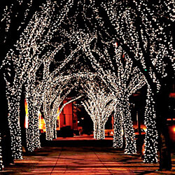 100 LED Solar-Powered 50ft String Fairy Lights- 1, 2 and 3 Pack