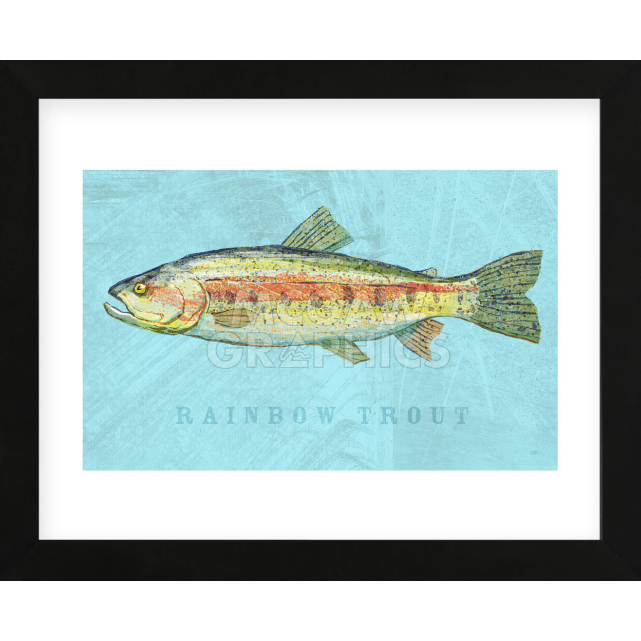 Rainbow Trout (Framed) 59482384c98fc473ef4ee1d0