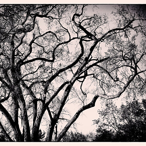Buy film noir trees spooky tree image black and white for Black and white tree mural