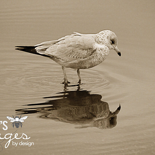 Buy seagull print sea bird photo bird photography for Photography prints to buy