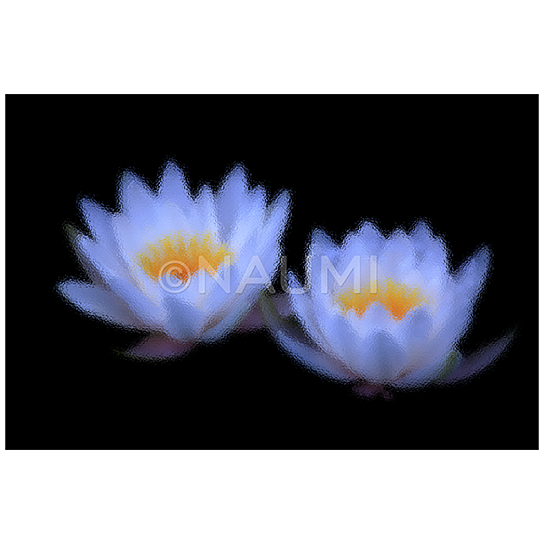 Buy white water lilies under stained glass 4x6 fine for Buy fine art photography
