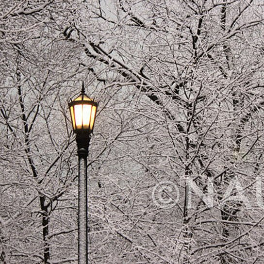 Buy winter fine art photography archival print lonely for Photography prints to buy