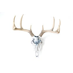 Faux Taxidermy - Chrome Deer Skull - Natural Antlers - Wall Mount With BS1300