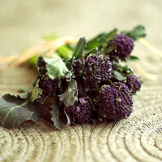 Buy Organic Early Purple Sprouting Broccoli Heirloom Vegetable Seeds by Nimble NiteCap Seed Co ...