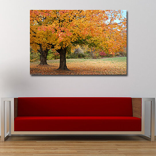Buy fine art photography color trees nature autumn for Buy fine art photography