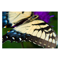 Butterfly Wings Wildlife Photography Wall Art Print (Unframed)