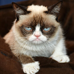 Grumpy Cat - TEST DO NOT PURCHASE