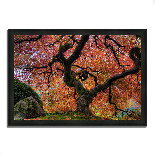 buy japanese maple in autumn 27 x 39 framed photograph print silky black frame by tangletown. Black Bedroom Furniture Sets. Home Design Ideas