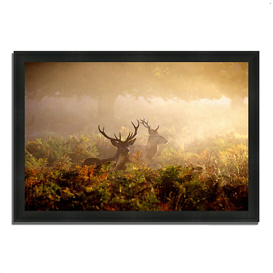 buy two stags at dawn 39 x 27 framed photograph print silky black frame by tangletown fine. Black Bedroom Furniture Sets. Home Design Ideas