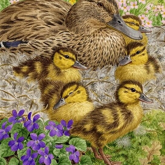 Buy female mallard duck and ducklings flag canvas house for Duck house size