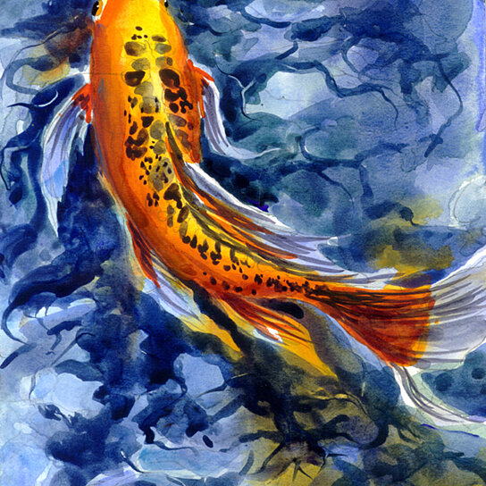 Buy fish koi flag canvas house size by the store on opensky for Koi fish size