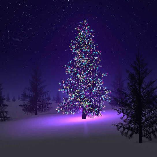 Solar Led Christmas Lights.Colorful Firefly Solar Mini Led Christmas Lights On Strings