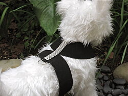SALE! Micro-Suede Crystal Small Dog Harness